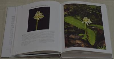 Bhutanthera albovirens Renz