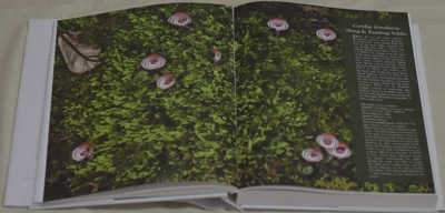 Corybas himalaicus (King & Pantling) Schltr.