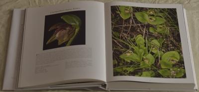 Cypripedium elegans Rchb.f.